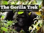The Gorilla Trek: A bushwalk you'll never forget