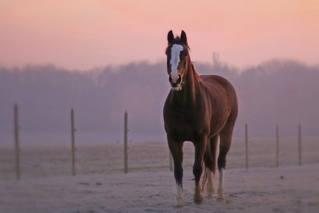 What's in store for you for the Year Of The Horse?